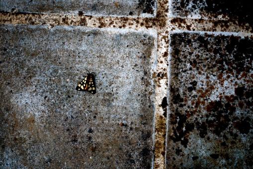 Lepidoptera at Pylos