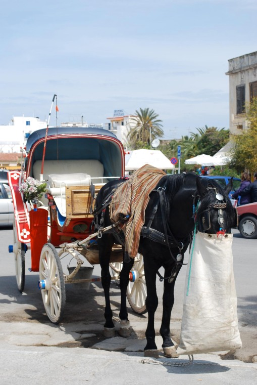 A friendly carriage horse enjoys his feedbag in Aegina town.