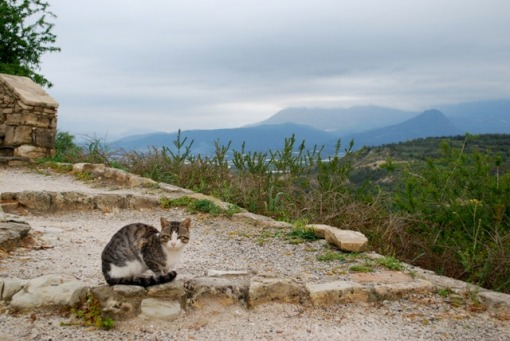 Greco Cat surveys the landscape.