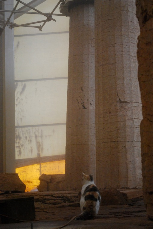 A local feline ponders evidence for the architectural agency of Iktinos at Bassae.
