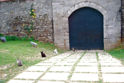 Cats in phylax formation at a gate in Topkapi palace.