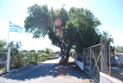 A tree in the middle of the road.