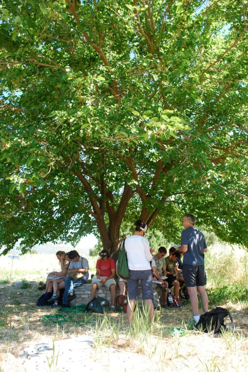 Lecture under a semi-sacred tree at the Heraion.