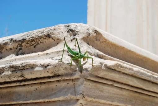 A grasshopper of Lovecraftian proportions attaches itself to one of the monuments.