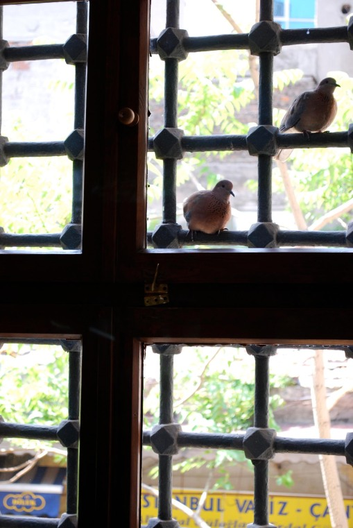 A pair of curious doves peeping into the mosque.