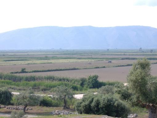 The plain around the site.