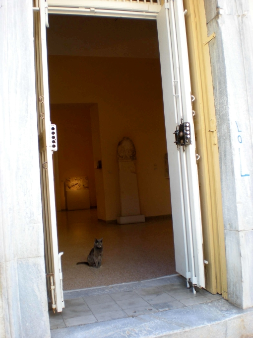 A cat waiting for us in the Syros Archaeological Museum