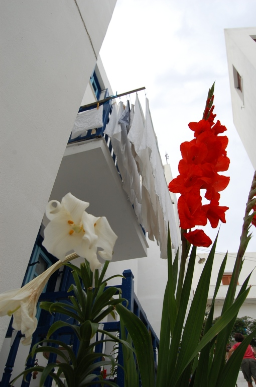 Exotic flowers in the wilderness that is Naxos.